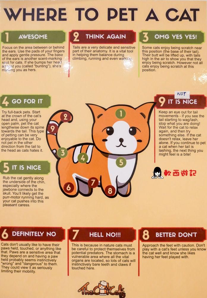 新加坡貓咪咖啡廳推薦》The Cat Cafe●跟15隻貓咪一起喝下午茶! 新加坡寵物咖啡廳推薦/新加坡貓咪咖啡廳 貓咪中途之家咖啡廳